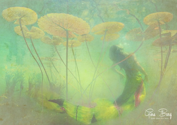 Gina Burg | Mixed Media Artist